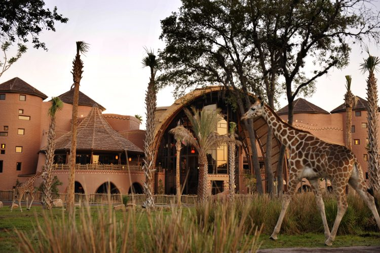 Image result for Disney Vacation Club Villas as Animal Kingdom Lodge
